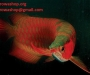 Arowana fish available. Visit our website today